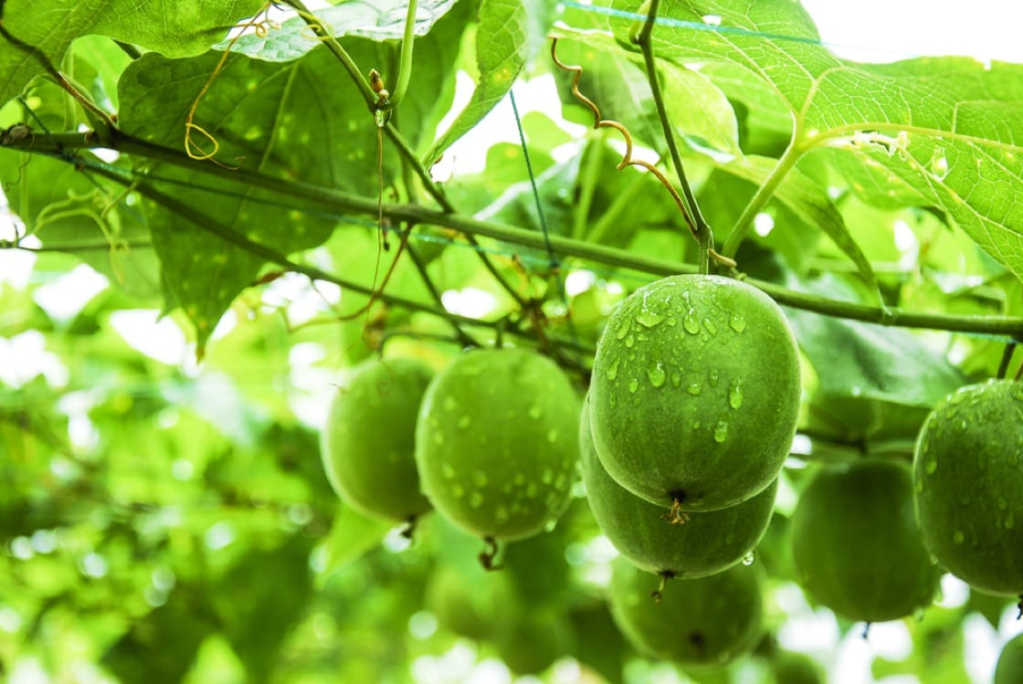 monk fruit sweetener suppliers-MingChemical